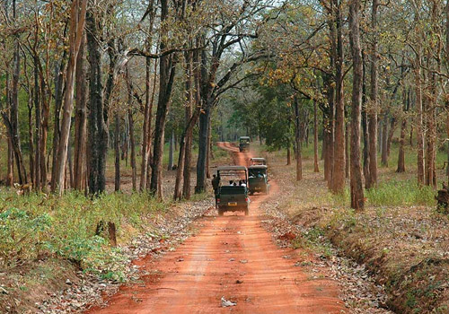 Nagarahole National Park the gateway to Jungle - Karnataka
